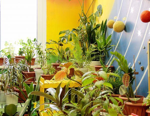 Растения дарят здоровье в Кстово