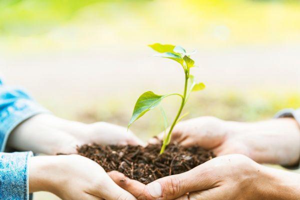Три социально-экологических проекта будут реализованы в Кстово